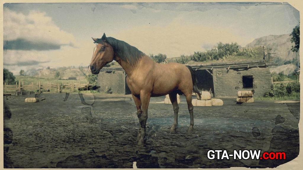 Морган конь