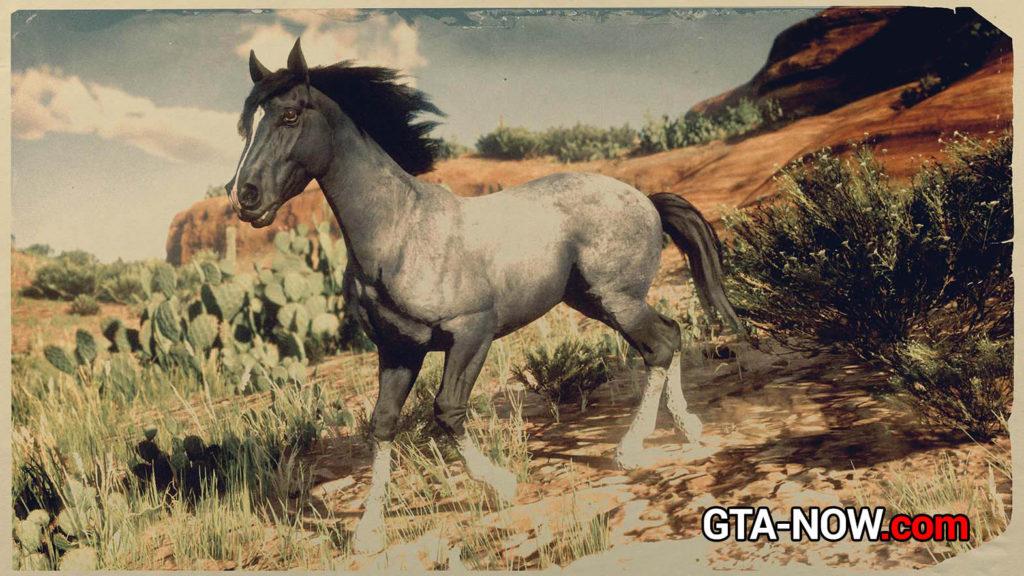 Нокота лошадь