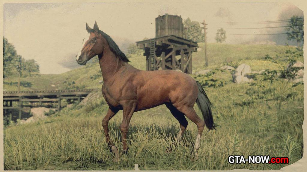 Чистокровная лошадь